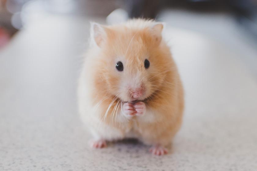 Tierarzt für Kleintiere in Regensburg